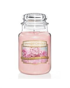 Аромасвеча Пудровый букет 16 8 см Yankee candle