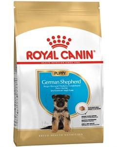 German Shepherd Puppy для щенков немецкая овчарка 3 3 кг Royal canin