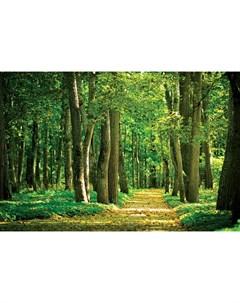 Фотообои Дорожка в лесу 360х254см Decoretto